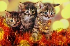 在圣诞节材料中的小小猫 免版税库存照片