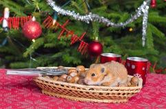 在圣诞节榛子的仓鼠 免版税库存照片