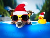 在圣诞节的海滩狗 免版税库存照片