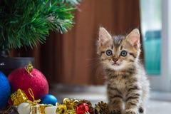 在圣诞节的逗人喜爱的小猫 免版税库存图片