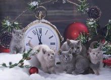在圣诞节的黑小猫装饰了背景 免版税库存照片