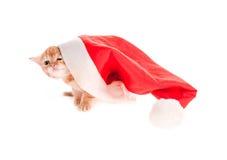 在圣诞节盖帽下的红色小猫 库存图片
