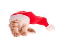 在圣诞节盖帽之下的红色小猫 库存图片