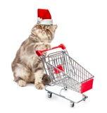 在圣诞节盖帽的猫与购物车 免版税库存图片
