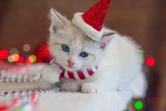 在圣诞节盖帽的猫 在圣诞老人衣服的小猫 免版税图库摄影