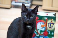 在圣诞节礼物前面的猫 免版税库存图片