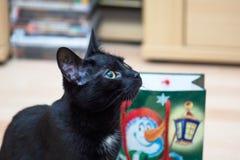 在圣诞节礼物前面的猫 库存图片