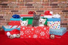 在圣诞节礼物的三只小猫 库存图片