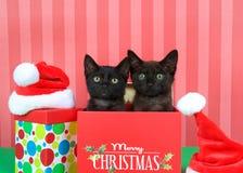 在圣诞节礼物的两只黑小猫 免版税库存照片