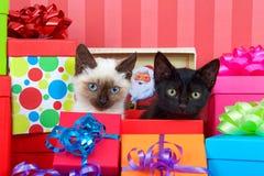 在圣诞节礼物的暹罗和黑小猫 免版税库存照片