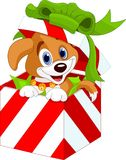 在圣诞节礼物盒的小狗 库存照片