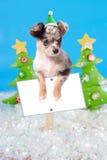 在圣诞节符号的狗 免版税库存照片