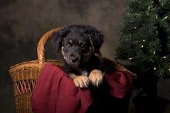 在圣诞节篮子的德国牧羊犬小狗 免版税图库摄影