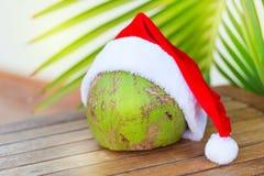 在圣诞节红色帽子棕榈叶的热带椰子 库存图片
