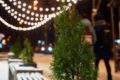 在圣诞节背景的金钟柏 免版税库存照片