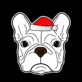 在圣诞节节日的逗人喜爱的法国牛头犬 免版税图库摄影