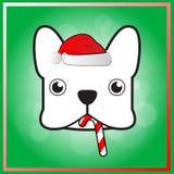在圣诞节节日的逗人喜爱的法国牛头犬 免版税库存图片