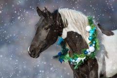在圣诞节花圈的马 免版税库存照片