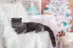 在圣诞节装饰的一只猫 免版税库存图片