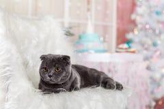 在圣诞节装饰的一只猫 免版税库存照片