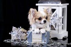 在圣诞节装饰的小狗 免版税库存照片