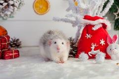 在圣诞节装饰背景的装饰逗人喜爱的鼠  免版税库存图片