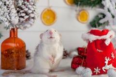 在圣诞节装饰背景的装饰逗人喜爱的鼠  免版税库存照片