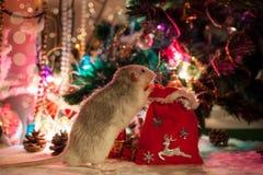 在圣诞节装饰背景的装饰鼠  免版税图库摄影