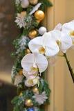 在圣诞节诗歌选背景的白色兰花  库存照片