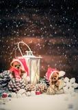 在圣诞节静物画的熊 免版税库存图片