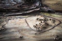 在圣赛勒斯海滩的漂流木头在苏格兰 库存照片