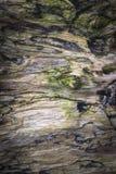 在圣赛勒斯海滩的漂流木头在苏格兰 图库摄影
