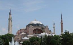 在圣索非亚大教堂前面的树在伊斯坦布尔,土耳其 免版税库存照片