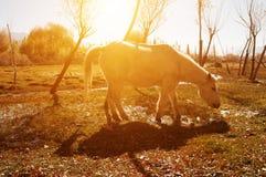 在圣洁鱼池的马 免版税库存图片