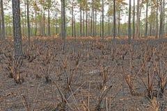 在地下火以后的森林土地 免版税图库摄影