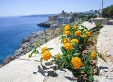 在地中海海岸的黄色花 库存照片