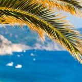 在地中海海湾的外型与在前景的一棵棕榈树 图库摄影