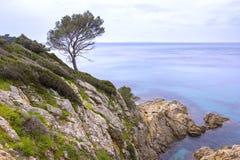 在地中海的典型的杉树 免版税库存图片