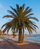 在地中海的棕榈树 图库摄影