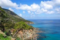 在地中海的背景的杉木 Akamas 塞浦路斯 库存照片
