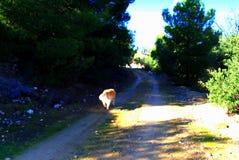 在地中海风景的道路与橄榄树在边,在一个晴朗的早晨 免版税库存图片