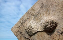 在地堡对面的圣玛格丽特` s在海 特写镜头索姆省海湾,法国 图库摄影