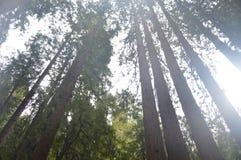 在地平线的树 免版税库存照片