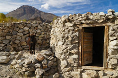 在地方房子的小牛在Hussaini村庄,北巴基斯坦 免版税库存图片