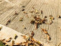在地板上是下落的叶子黄色和橙色 说谎表面上的许多下落的秋叶 太阳是光亮的 免版税库存图片