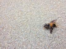 在地板上的一只死的蜂 免版税库存图片