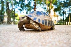 在地板上的乌龟 图库摄影