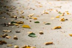 在地板上的叶子是许多形状 免版税库存照片