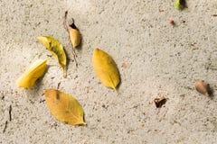在地板上的叶子是许多形状 图库摄影