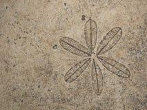 在地板上的叶子邮票 库存照片